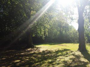 Yoga op de Hertenhorst